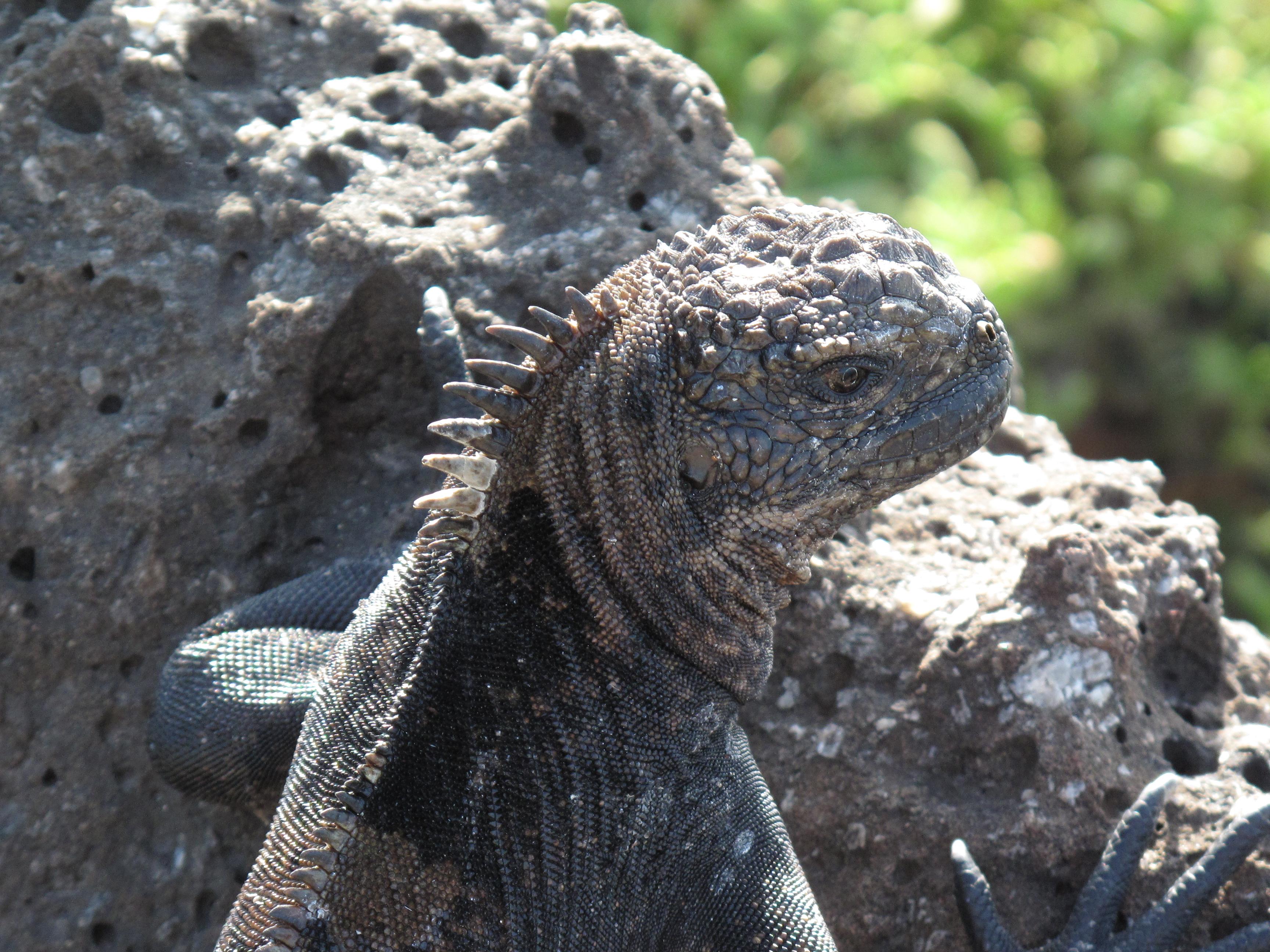 Photo Essay: The Galapagos Islands