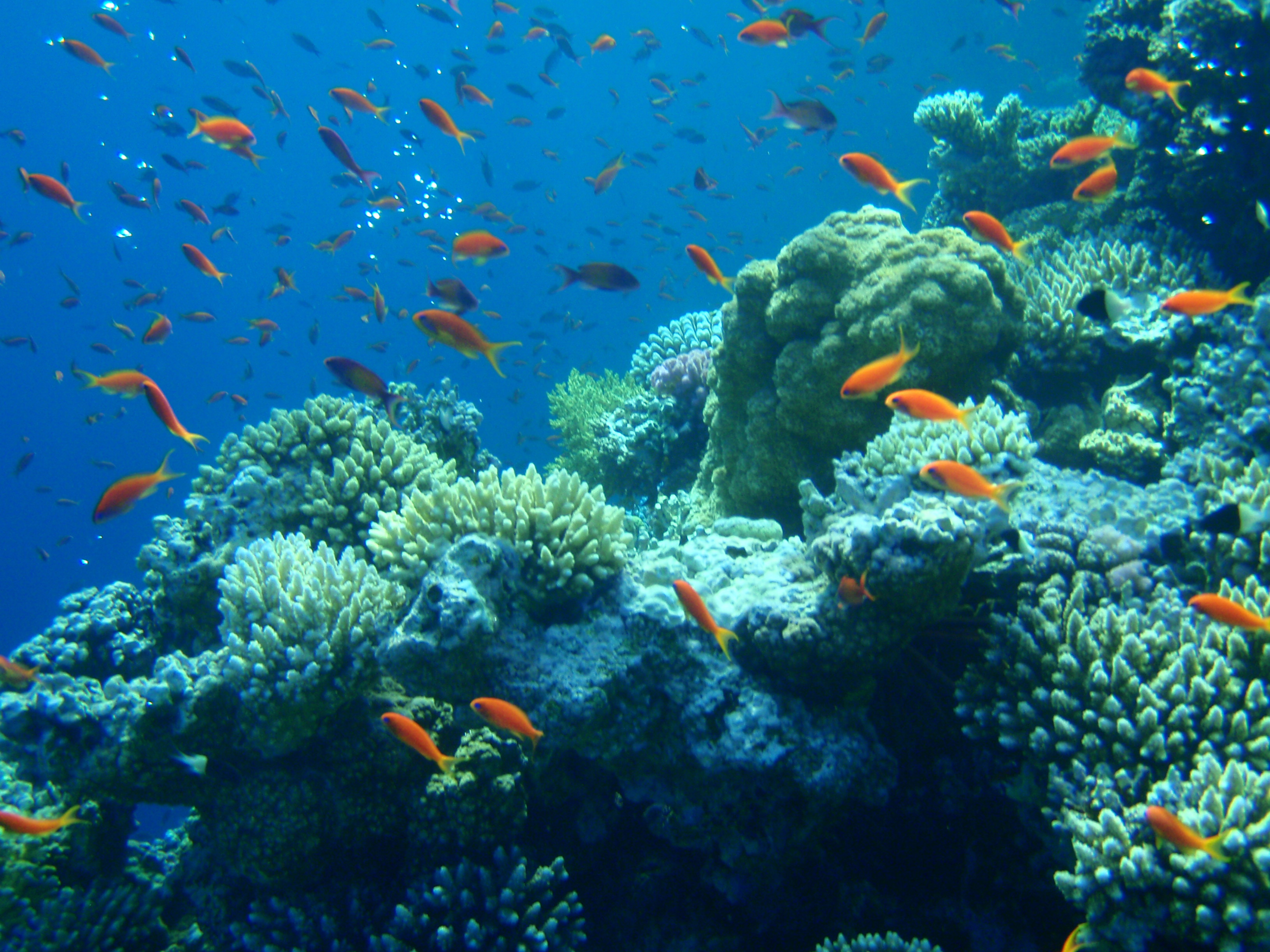 Snorkeling & Diving the Red Sea – Dahab, Egypt