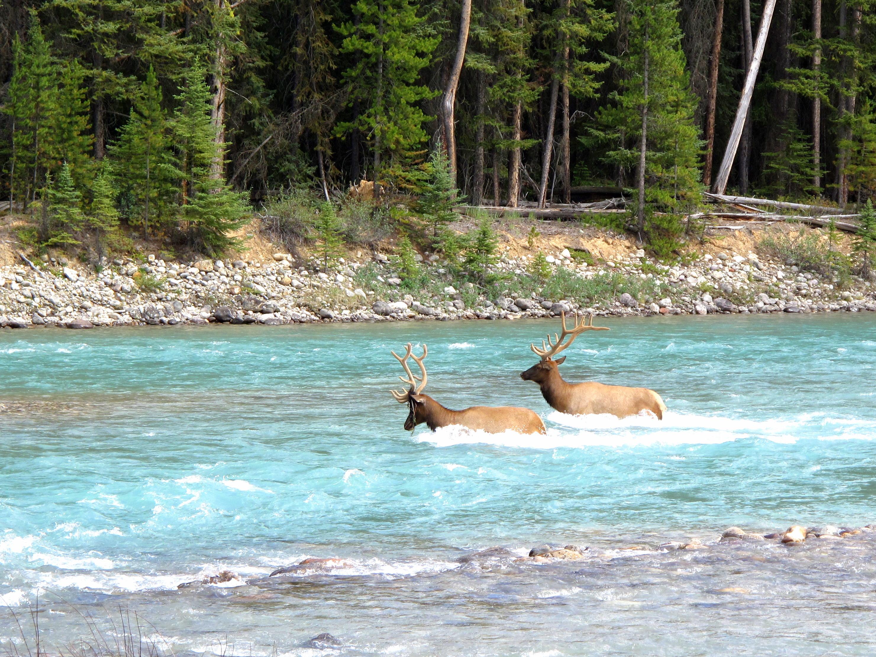 Canadian Rockies Road Trip – Photo Blog (part 2)