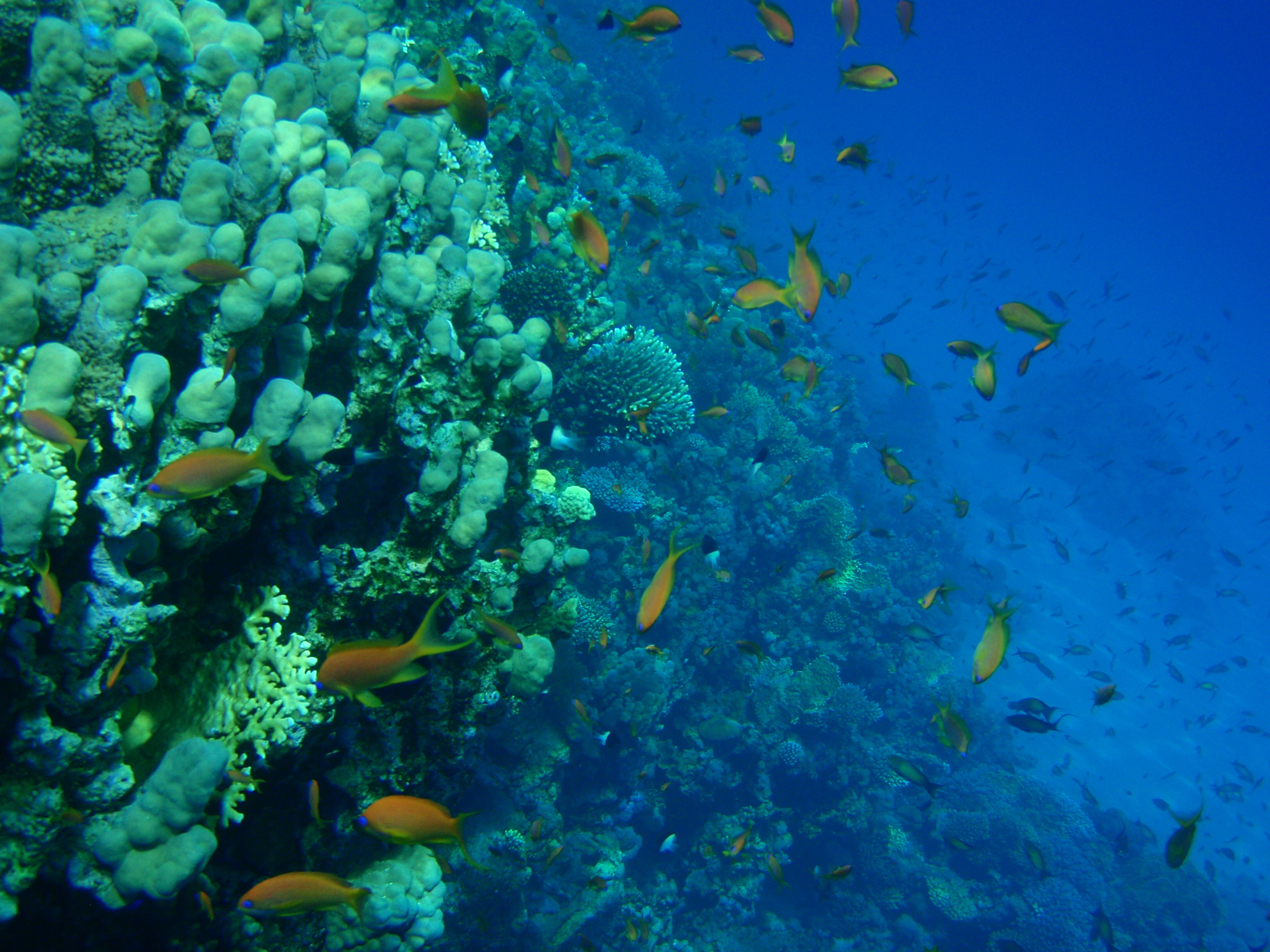 Photo Blog: Snorkeling the Red Sea in Dahab, Egypt