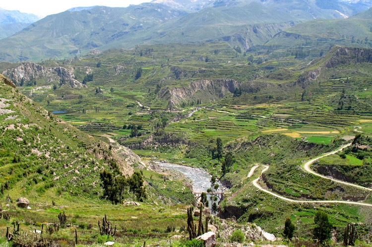 Lush green terraces in Colca Valley Peru