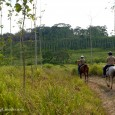 A short video of our afternoon horseback ride through Chaa Creek's 365 acre nature reserve, located in the foothills of the Maya Mountains in the Cayo District of Belize