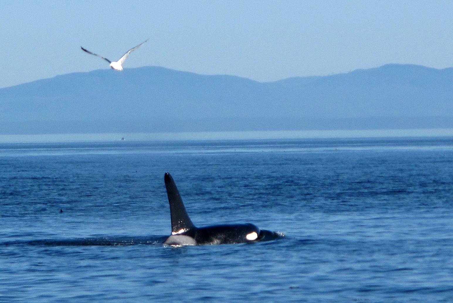 Orca Photography Tour