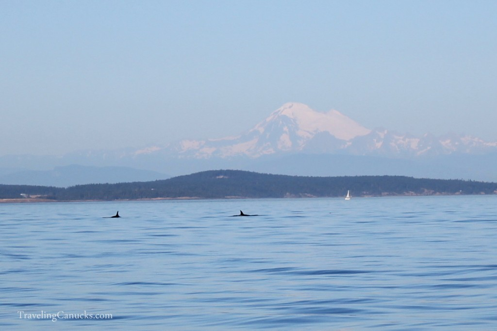 Whales, Mount Baker, Salish Sea