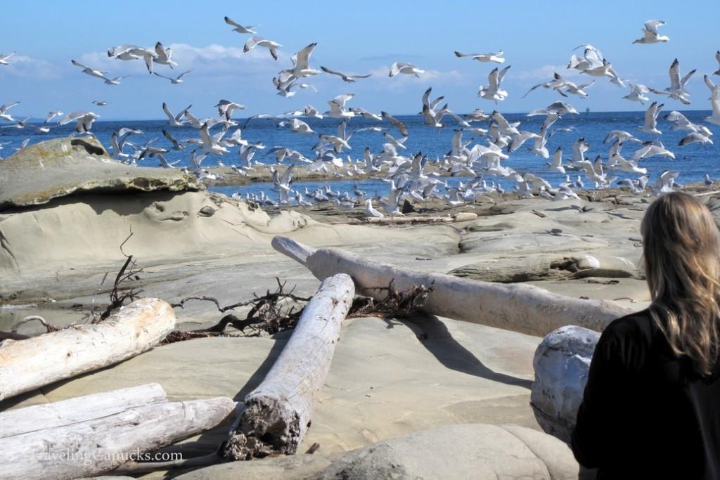 Galiano Island Sturdies Bay