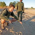 Guest post that uncovers a unique African adventure - a walking wildlife safari in the South Luangwa of Zambia