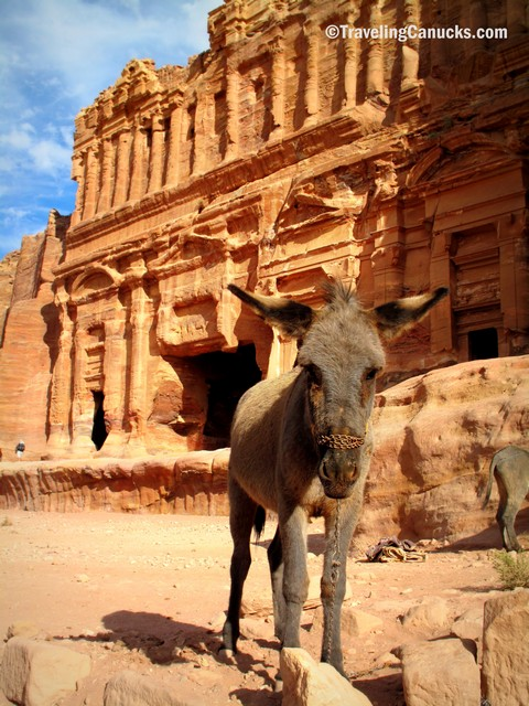 Photo of the Week: Curious Donkey in Petra, Jordan