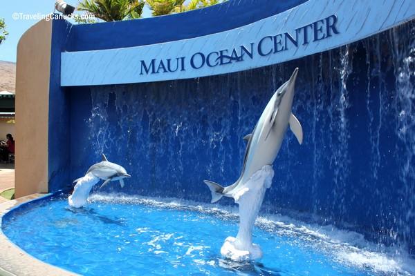 shark overhead, Maui aquarium, Maui, Hawaii photo - Long Bach ...