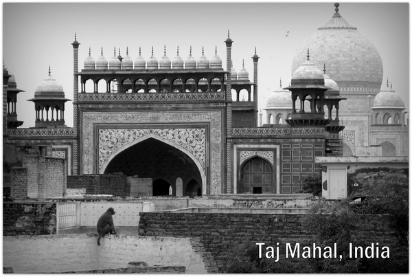 taj-mahal-agra-india