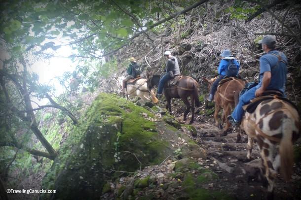 Molokai Mule Tour