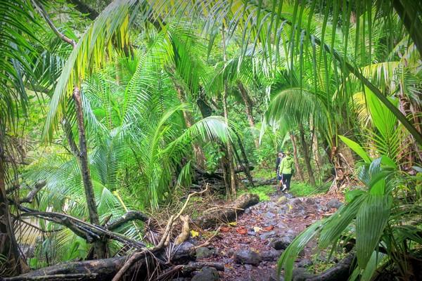 molokai-hawaii-hike-halawa-valley01