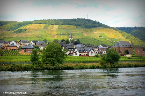 Vineyards in Mosel River Valley, Germany