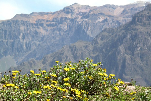 colca-canyon-peru-15