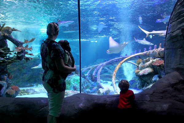 sea-life-aquarium-arizona-26