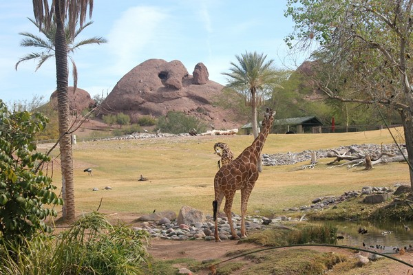 Phoenix Zoo And Aquarium