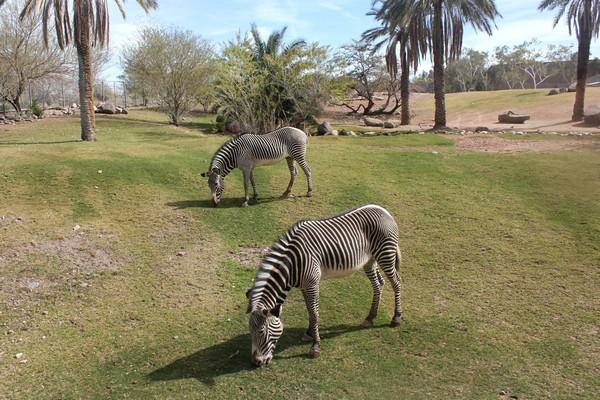 Wildlife encounters at the impressive Phoenix Zoo