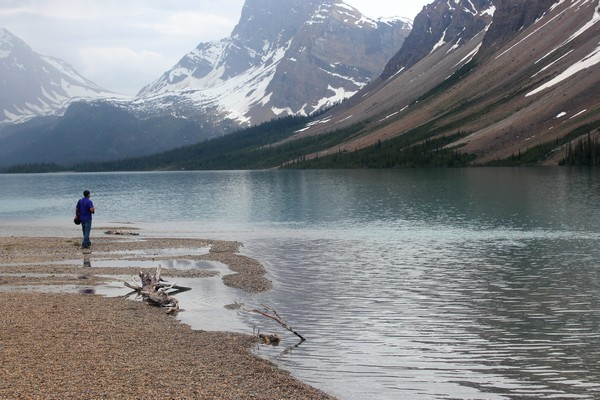 Bow Lake, Canadian Rockies, Alberta