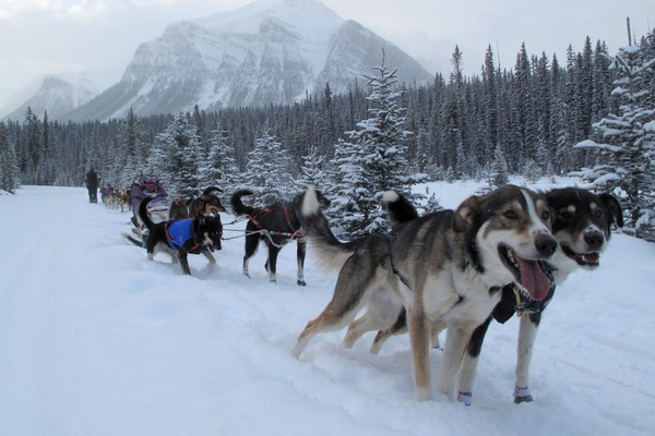 dog-sled-lake-louise-alberta-05