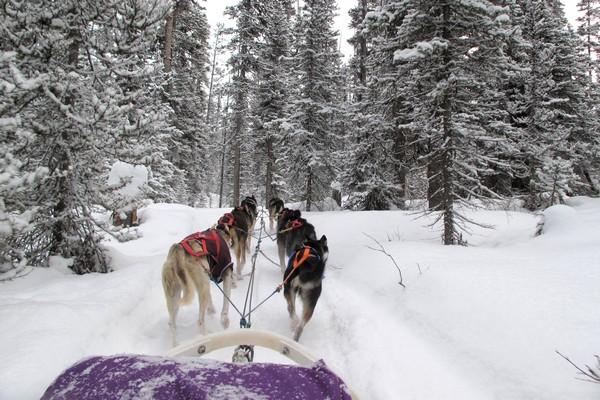 Dog sled tour in Lake Louise, Alberta
