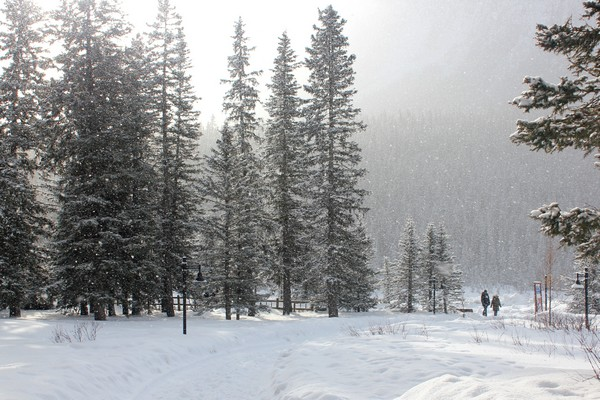 Winter in Banff National Park