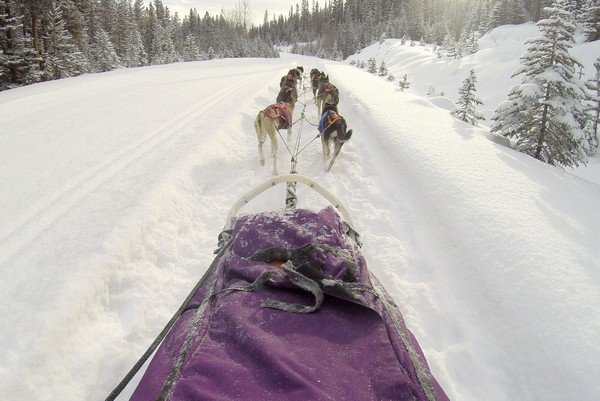Dog sledding to the Great Divide in the Canadian Rockies