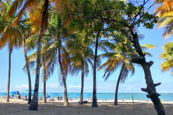 Palm trees on Isla Verde Beach, San Juan, Puerto Rico