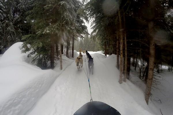 Dog sledding at Sun Peaks Resort, British Columbia, Canada
