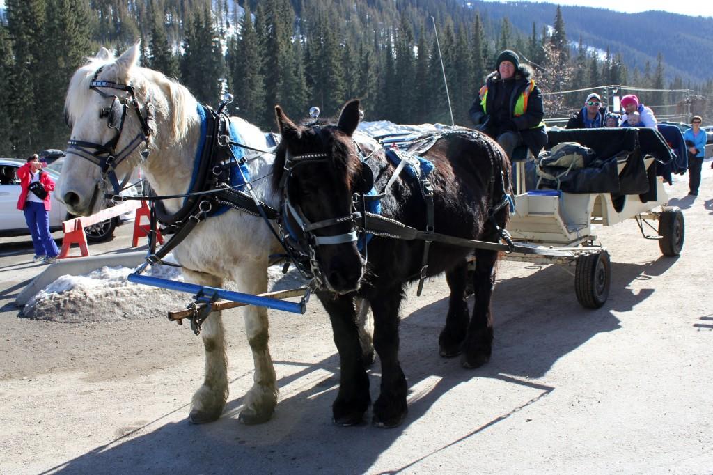 Sun Peaks, Horse Drawn Carriage Tour