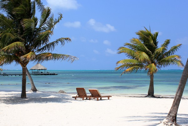 beach, palm tree, ambergris caye, belize, caribbean