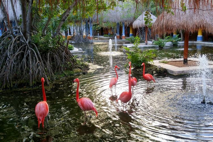 Flamingos, Iberostar Paraiso Del Mar, Rivera Maya, Mexico