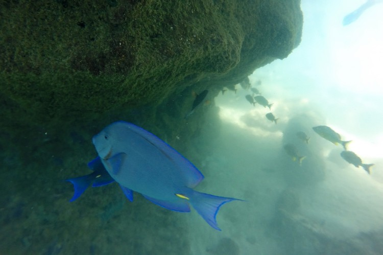 Snorkeling, Fish, Xel-Ha Park, Riviera Maya, Mexico