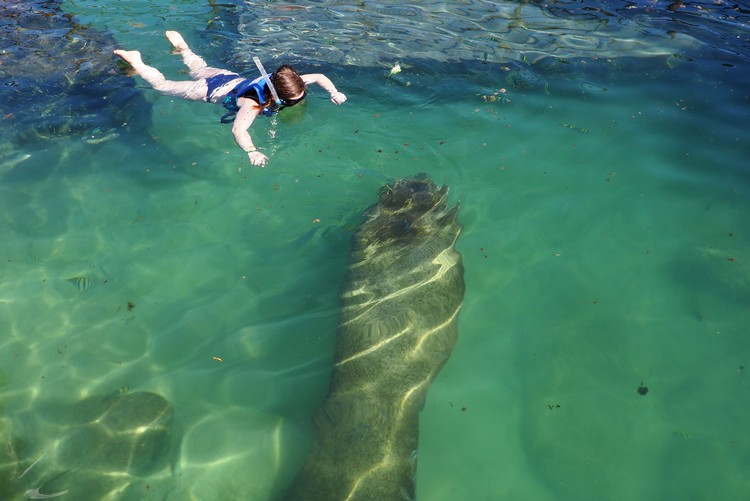 Manatee Encounter at Xel-Ha Park, Mexico