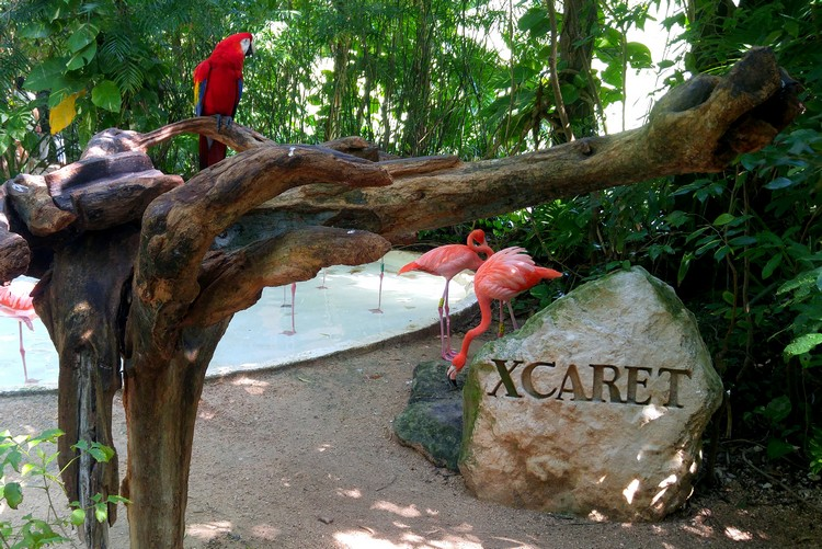 What You Need To Know Before Visit Xcaret