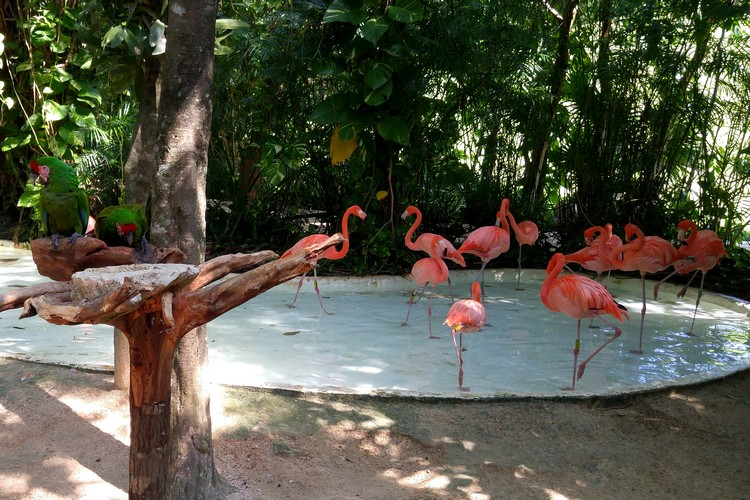 pink flamingos inside Xcaret park in Cancun Mexico, family travel guide