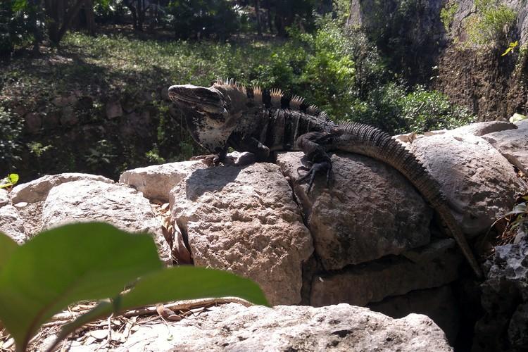 iquana Xcaret theme park, Riviera Maya travel guide