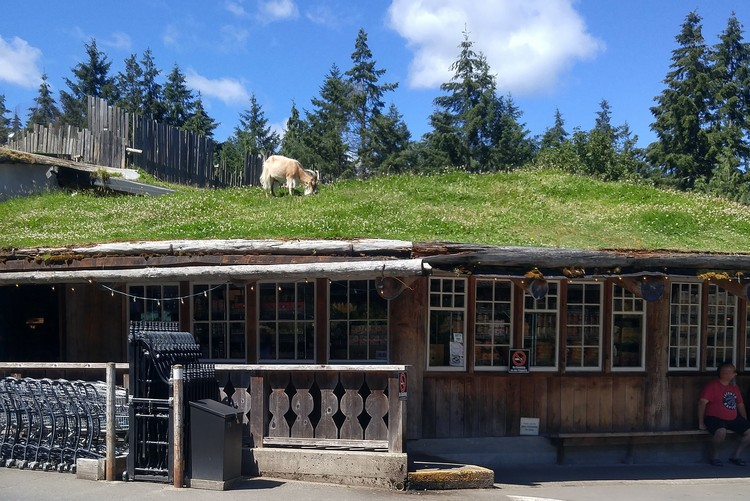 Goats on the Roof at Coombs Market, Nanaimo, Vancouver Island, British Columbia, Canada