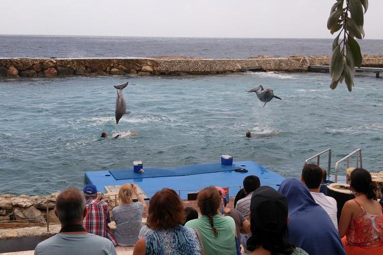 Curaçao sea aquarium dolphin show