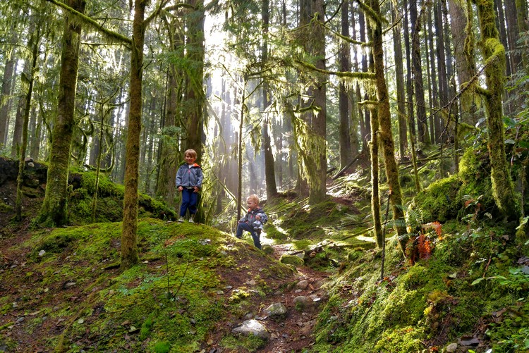 kids hiking in Lynn Valley park near Rice Lake trail, free things to do in Vancouver this summer