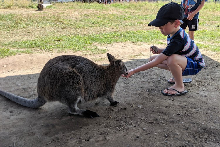 Kangaroo Farm Kelowna petting kangaroo
