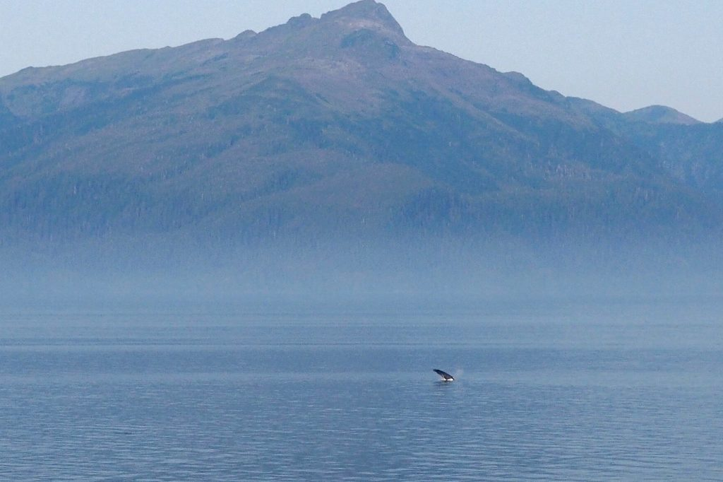 humpback whale watching on Alaska cruise ship Celebrity Cruises
