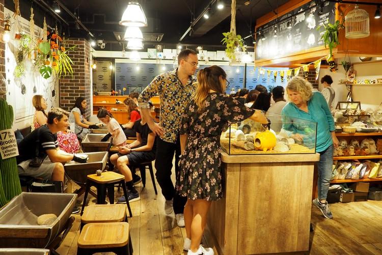 Harry Hedgehog Cafe Harajuku Tokyo
