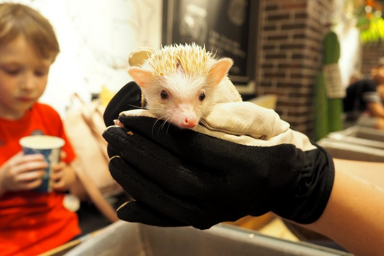 Hedgehog Cafe, Tokyo