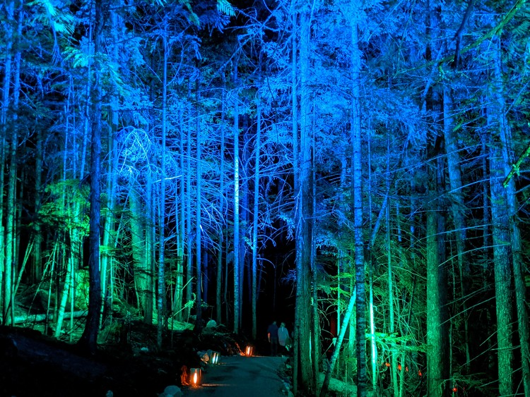 The night forest at Vallea Lumina Whistler