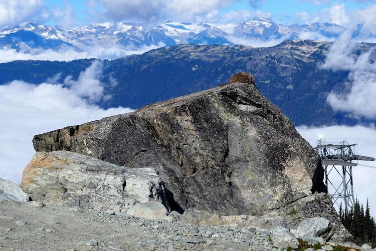 Marmot sleeping on rock on Blackcomb Mountain, views of mountains alpine hiking trails, Whistler British Columbia