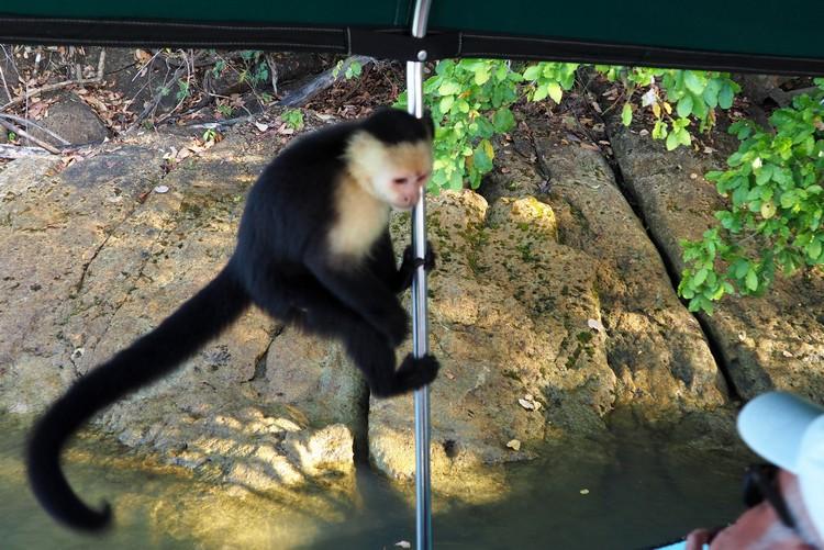 Monkey Island Panama tour from Panama City