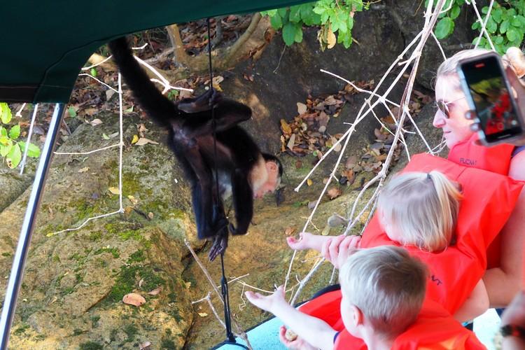 feeding monkey on the boat, monkey island panama city panama