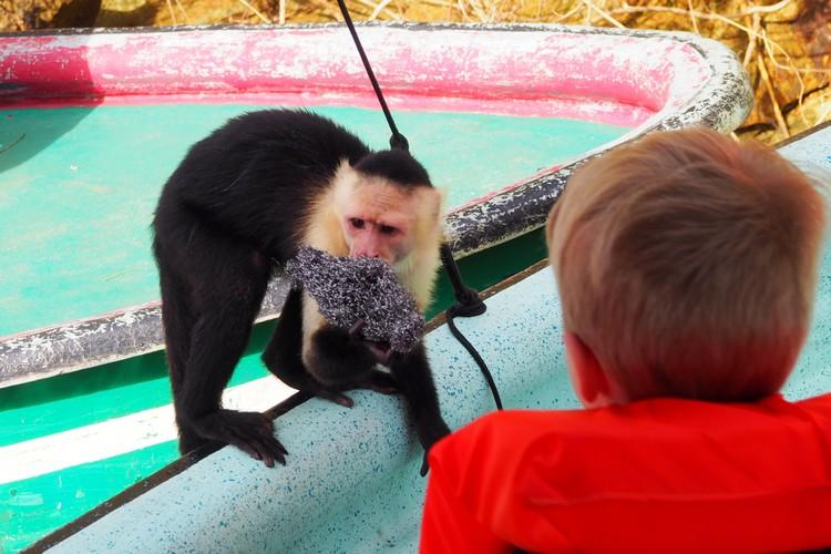 Monkey stealing from a boat on Monkey Island Panama City